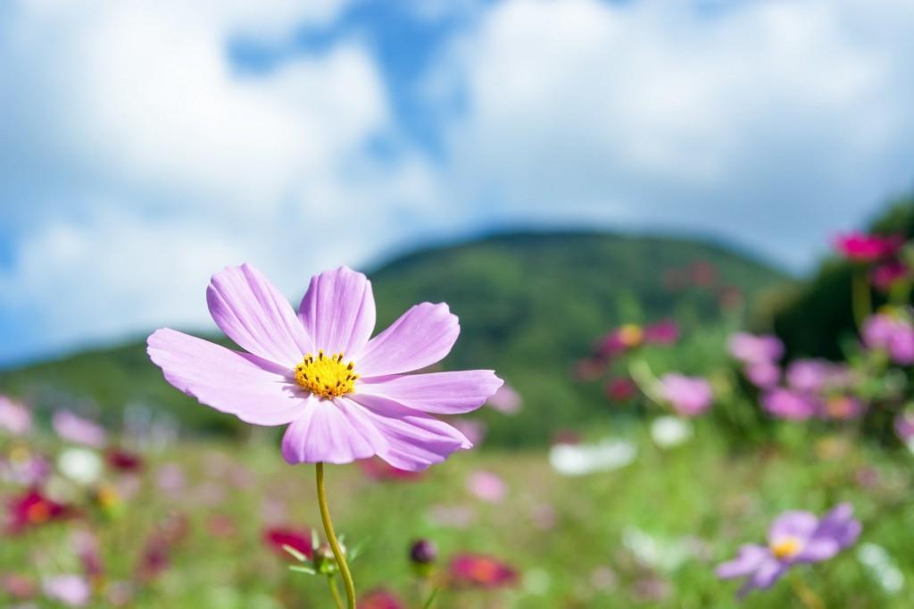 青空の下に咲く紫色の花